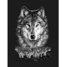 The Grey Wolf Pack G145 Blanket is the softest, brightest, and plushest printed blanket on the planet. Can be used at the game, on a picnic, in the bedroom, or cuddle under it in the den while watching TV. These blankets are extra warm, as soft as mink and have superior durability. Made of an acrylic blend.Easy Care, machine wash and dry. Queen Size approx. 200x240 cm or 79x95 in. Buy online www.TheBlanketCompany.com or Call at (801) 280-6200.