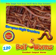 Fishing Bait... (120 Live European Night Crawlers) - Excellent For Composting & Gardening