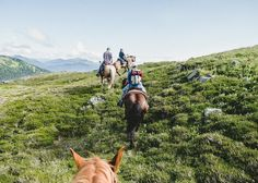 """""""Probably the highlight of my life was going on a three day horse packing trip up into the Kispiox backcountry with @bearclawlodge. It is beautiful country with some magnificent terrain and it was so neat to experience it on a horse. Usually we are hiking biking or in a car and this was so unlike any of those things.  I really wanted to capture a photo where the viewer could feel as immersed in the photo as if they were really there. I thought a great way to initiate that feeling would be…"""