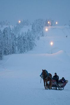 The Enchanted Cove - Horse Sled / Flickr - Photo Sharing!