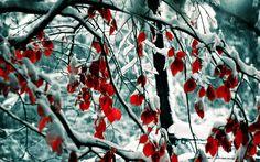 One Million Photo: A Beleza da Neve