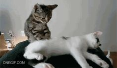 Hey? Area you sleeping?  http://ift.tt/2nLP62w