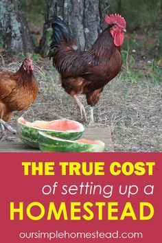 Cost of Setting up a Homestead I wish I could say that self-sufficient homesteading was an inexpensive way to live, but in all reality, the initial start-up cost of setting up a homestead can be very expensive, and the learning curve can be steep at times. #homesteadingcosts #homesteading #homestead