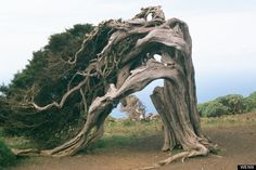 Trees are capable of creating strange works of unintentional art. Of the planet's 400 odd billion trees, we go out on a limb and root-out some of the most