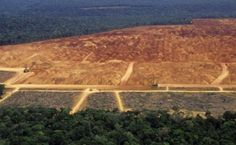 BioOrbis: ″Desmatamento zero já é insuficiente na Amazônia″