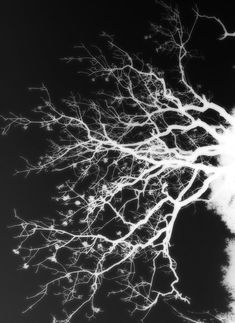 Neurons by Tharlam