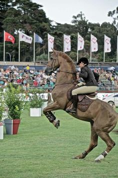 Baloubet at the age of 24. He competed in more than 250 international competitions winning 25% and 3 world championships with Rodrigo Pessoa