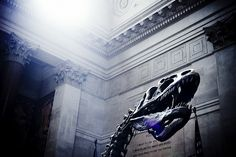 Museum of Natural History, NYC