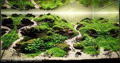 2014 AGA Aquascaping Contest - Entry #589