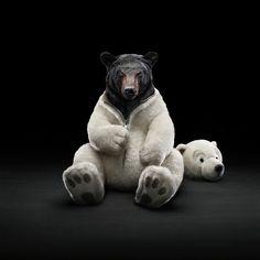 In dit beeld zijn twee contrasten. Ten eerste een zwart wit contrast. Het lijf en de kop van de ijsbeer staan tegenover de zwarte kop van de beer. Het tweede contrast  zijn de gezichtsuitdrukkingen van beide beren. De kop van de ijsbeer ziet er leuk en lief uit, en wekt het idee dat hij lacht. Daar tegenover staat de gemene enge blik van de  zwarte beer. Dit is iets wat je niet verwacht, en misschien ook wel een achterliggende gedachte. Is de ijsbeer toch niet zo lief als hij eruit ziet?....