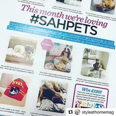 Wahooo!! Another Woollysaurus creation featured in @styleathomemag Thanks guys! 🤓 This month it was the dog bed I made I made for the @orange_blossom_bakehouse pooch, Ralph the Beagle 🐾🐶🐕 #feature #magazine #competition #handmade #sewing #dog #fabric #dogfabric #haberdashery #craft #style #pets #sleep #petbed #makes #woollysaurus #etsyseller #etsy #instadaily