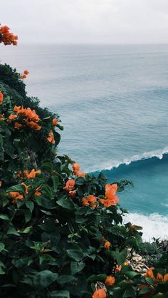 Orange Bougainville.