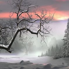 ~~ Winter Trees by Igor Zenin~~