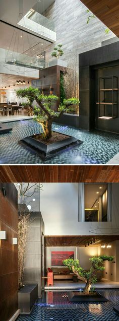 Indoor atrium with a big bonsai tree in middle of a shallow pool