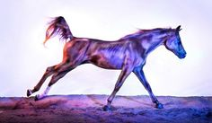 www.pegasebuzz.com | Equine photography : Andrew McGibbon - All The Wild Horses