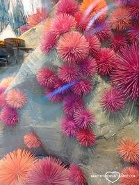 Sea urchins made from painted wooden skewers and styrofoam balls -   Under the Sea - Anthropologie Window Display from i heart interiors