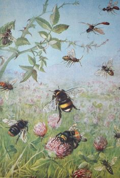 1930 Bee and flower illustration