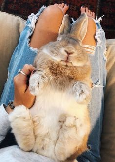 ✰V S C O:andreamejicano ✰ Cute Little Animals, Cute Funny Animals, Cute Dogs, Cute Baby Bunnies, Cute Creatures, Animals Beautiful, Animals And Pets, Fluffy Animals, Fur Babies