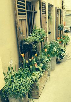 Flowers in the street. Paris