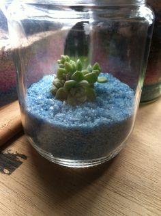 Succulent with blue sand Terrarium