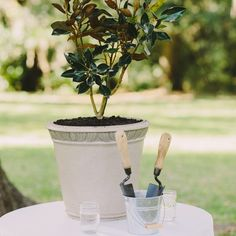 Unique Ceremony Details - Instead of a traditional unity candle ceremony, instaed water a potted magnolia tree their mothers planted. The tree now stands in the yard of their first home