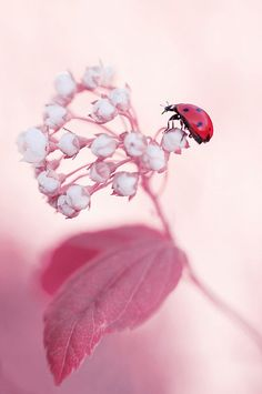 lady bug and pink flowers Photo Macro, Beautiful Flowers, Beautiful Pictures, Tier Fotos, Macro Photography, Belle Photo, Beautiful World, Beautiful Creatures, Mother Nature