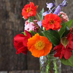 * Bright blooms fresh from the garden - Annabel Langbein Beautiful Flower Arrangements, Love Flowers, Fresh Flowers, Wild Flowers, Beautiful Flowers, Pretty Nose, Cooking Tv, Flower Bouquet Wedding, Flower Vases