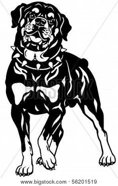 dog rottweiler breed,front view, black and white illustration ,