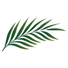 palm leaf drawing google search pinteres rh pinterest com palm leaf vector free palm leaf pattern vector