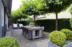 Ek hou van hierdie bome - is dit Catalpa? Ekt een in Dagbreek se tuin gehad - mooi!