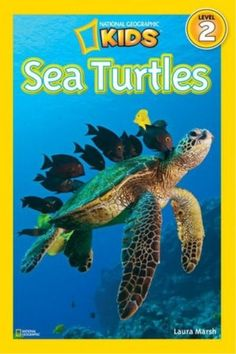We have been enjoying our sea turtle day! Kids think sea turtles are incredible and we actually read a sea turtle book as . Turtle Facts For Kids, Sea Turtle Facts, Sea Turtles, Turtle Day, Turtle Book, Reptiles, Amphibians, National Geographic Kids Books, Sea Turtle Species