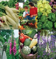 1000 Images About Garden Resources On Pinterest Seeds