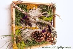 DIY Living Wall with Air Plants - Sow & Dipity