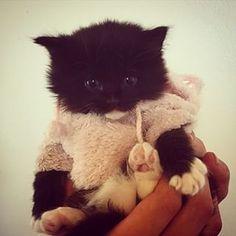 #dollclothes #hoodie #sweater #supercute #pink #chill #kitten #kittensfarm Black Kittens, Doll Clothes, Chill, Super Cute, Hoodie, Photo And Video, Sweater, Cats, Pink