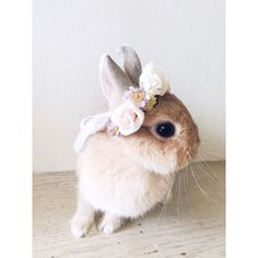 Pets flower crown wedding spring rose doll hair by lalapinhandmade Cute Baby Bunnies, Baby Animals Super Cute, Cute Little Animals, Cute Funny Animals, Cute Dogs, Cute Bunny Pictures, Cute Animal Pictures, Pet Bunny Rabbits, Cute Creatures