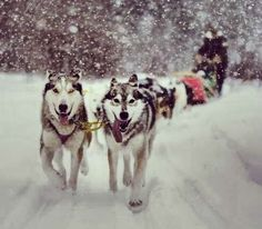 Husky Sledding Finland - Get acquainted with the huskies on the farm, harness them for the trip and go sleighing with a whole pack at your command. Want to discover more hidden gems in Europe?? All of them can be found on www.broscene.com