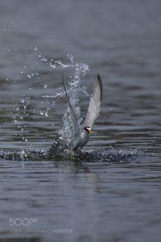 splash by tsunepy via http://ift.tt/2sYGglX