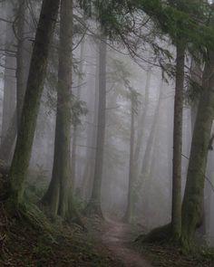 My morning walk in Forest Park, Portland, Oregon.