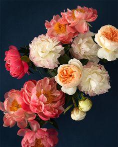 Peonies Fine Art Print by Kari Herer #botanical #floral #etsy
