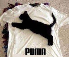 Cat + shirt = :)