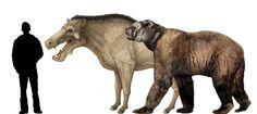 Arctodus & Daeodon size comparison