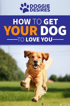 How To Get Your Dog To Love You >> http://doggiedesires.com/how-to-get-your-dog-to-love-you/