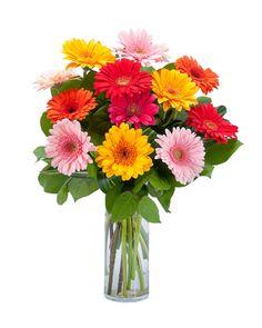 Grand Gerbera Flower Arrangement
