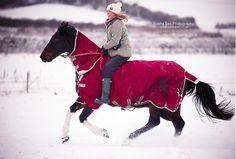 winter horsebacking | Horses in Winter