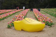 Did you realize there's a little slice of Holland in Virginia? Haymarket's Festival of Spring in Burnside promises tulips for as far as the eye can see. Dc Travel, Adventure Travel, Places To Travel, Travel Info, Travel Ideas, Travel Goals, Travel Tips, Vacation Trips, Vacation Spots