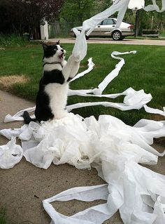 Toilet Paper, Toilet Paper, Yay Yay Yay!......[looks like kitty is TP-ing someone's house...?] no yay yay yay there!!