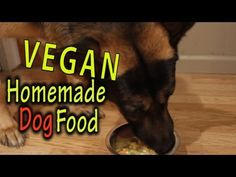 ▶ Homemade Dog Food (Vegan) - The Vegan Zombie - YouTube....If she was still…