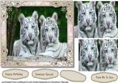 Beautiful White Tiger cubs  on Craftsuprint designed by Ceredwyn Macrae - A lovely Pyramid card to make and give to anyone with Beautiful White Tiger Cubs very easy with Two Layers has three greeting tags and a blank one for you to choose the sentiment,  - Now available for download!