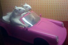 Funeral Home Decorated with Bizarre Roadkill Dioramas