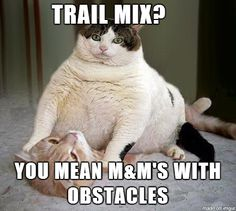 Trail mix, you mean m&m's with obstacles | Funny memes and rage comics